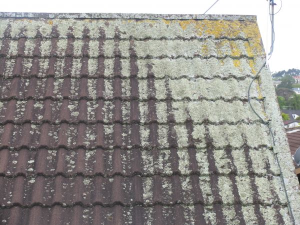 Roof affected by Moss, Mould and Lichen